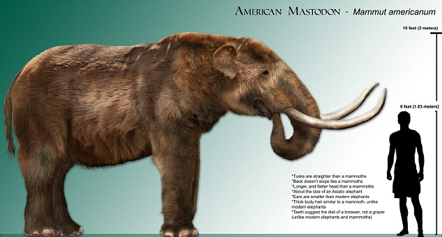 Mastodon and Man