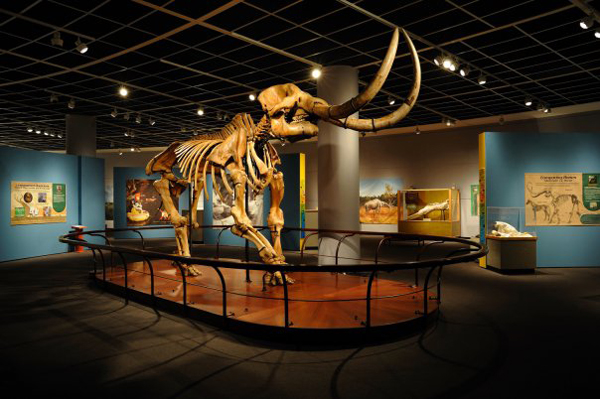 Marshall Creek Mastodon